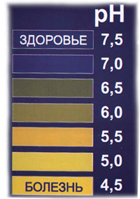 podnyala-vyaliy-chlen