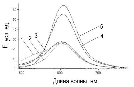 kontsentratsiya-spermatozoidov-eto