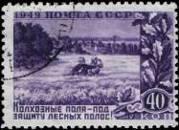 Пшеничное поле, огражденное лесными полосами