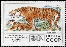 Природа и экология - Амурский тигр
