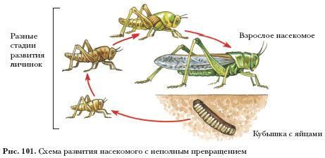 Отряды насекомых с неполным превращением — урок. Биология, Животные (7 класс).