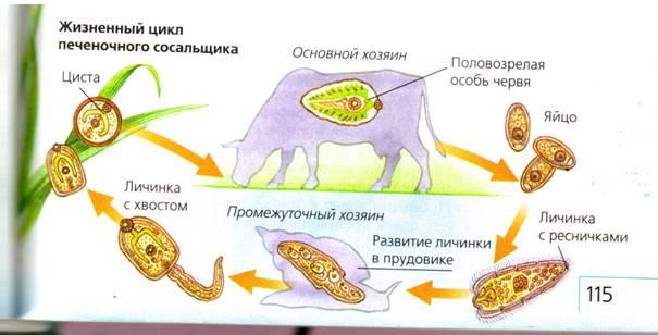 книга семеновой очистись от паразитов