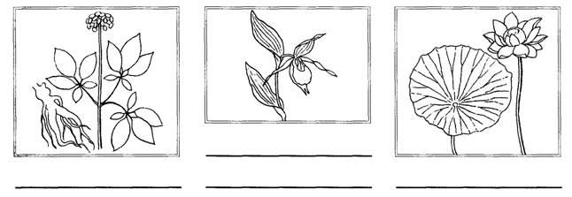 растения красной книги картинки с описанием как рисовать всего, ближайшем будущем