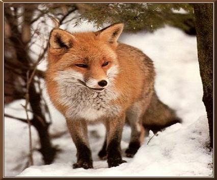Разнообразие животных краснодарского края доклад 8345