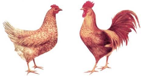 Продамкупить гусята муларды утята цыплята куры с