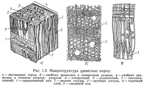 Строение клетки водорослей рисунок они