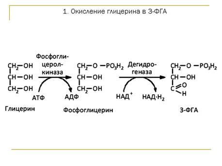 Аминокислоты также могут