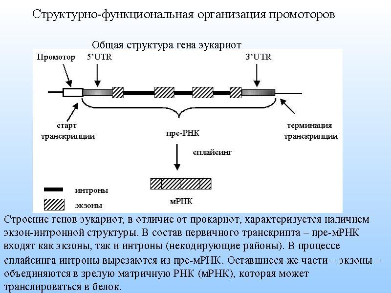 Решение задач на интроны и экзоны пример решения задач на движение по окружности