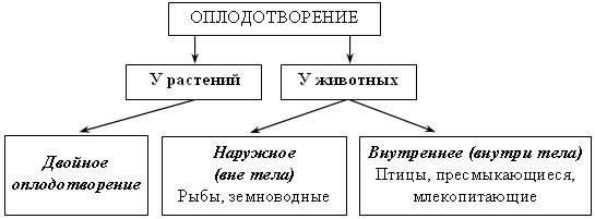 harakternie-osobennosti-spermatozoida