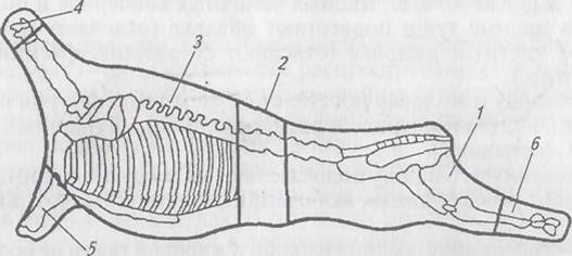 Схема сортового разруба
