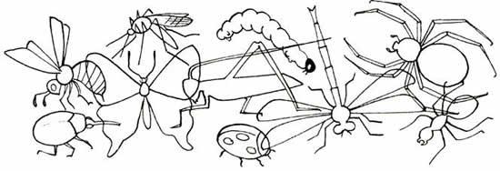 Картинки раскраски насекомые