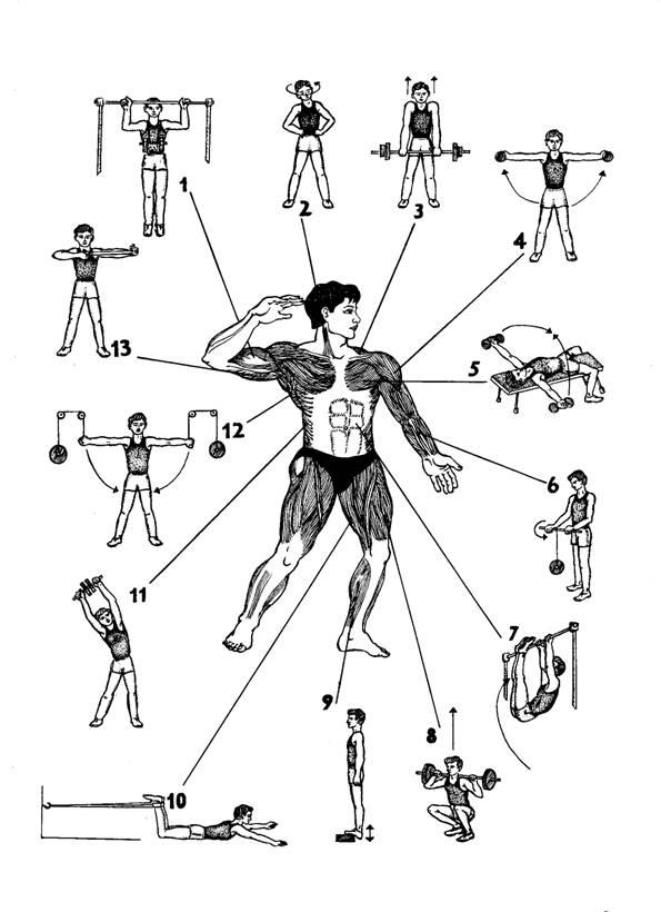 Упражнения для плеч и рук с картинками