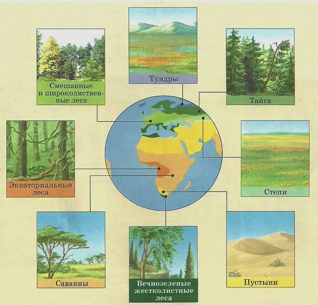 картинки разных природных зон элегантность