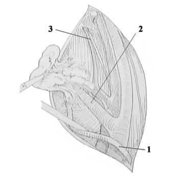 Воспаления лимфоузлов: возможные причины увеличения лимфоузлов на шее, в паху, под мышками и профилактика заболевания