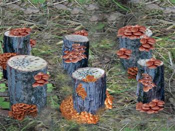 Выращивание грибов на садовом участке для новичков 33