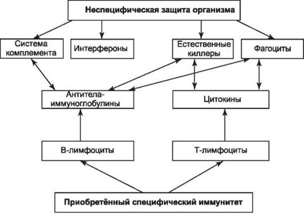 Схема патогенных организмов