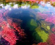 Уникальная река мира - Разноцветная река - Каньо Кристалес