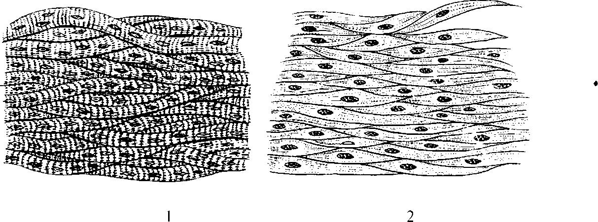 Гладкая мышечная ткань картинки