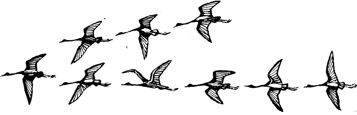 Картинка птиц летящих клином