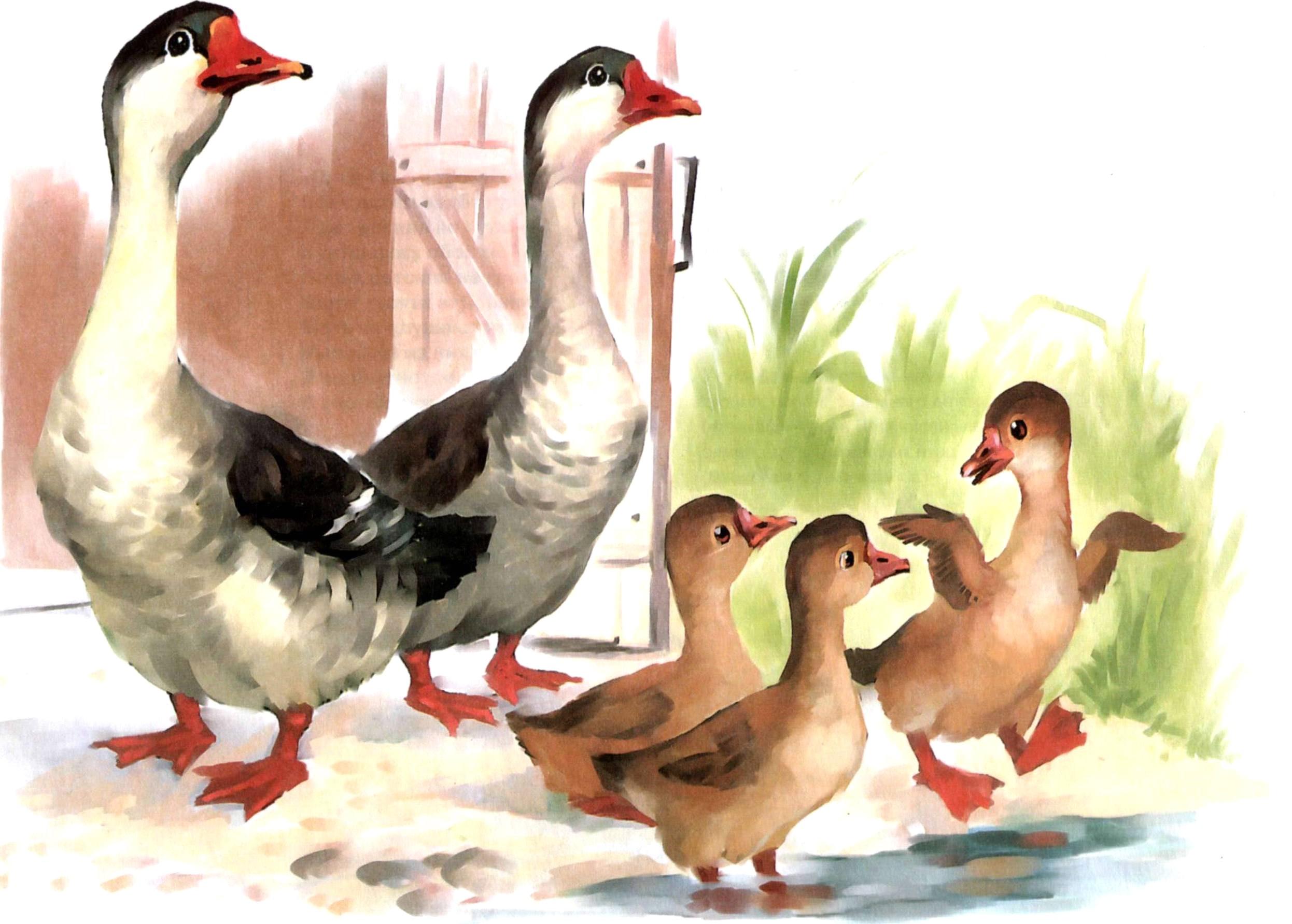 Картинки дети и домашние птицы