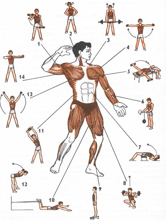 Атлетическая гимнастика в картинках