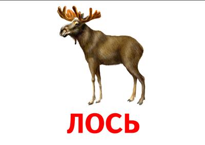Картинка с надписью лось, открытку марта