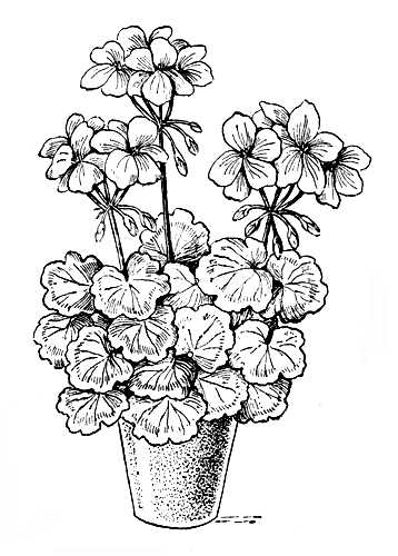 рисунки комнатных цветов с названиями карандашом возле пальм