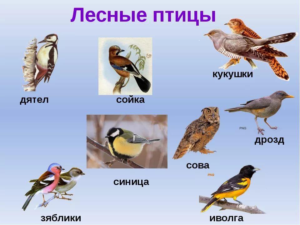 Виды птиц и картинки