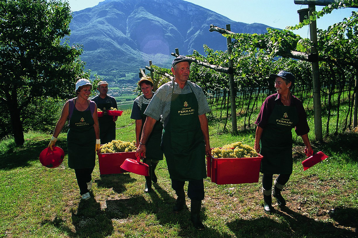 Днем, сбор винограда прикольные картинки