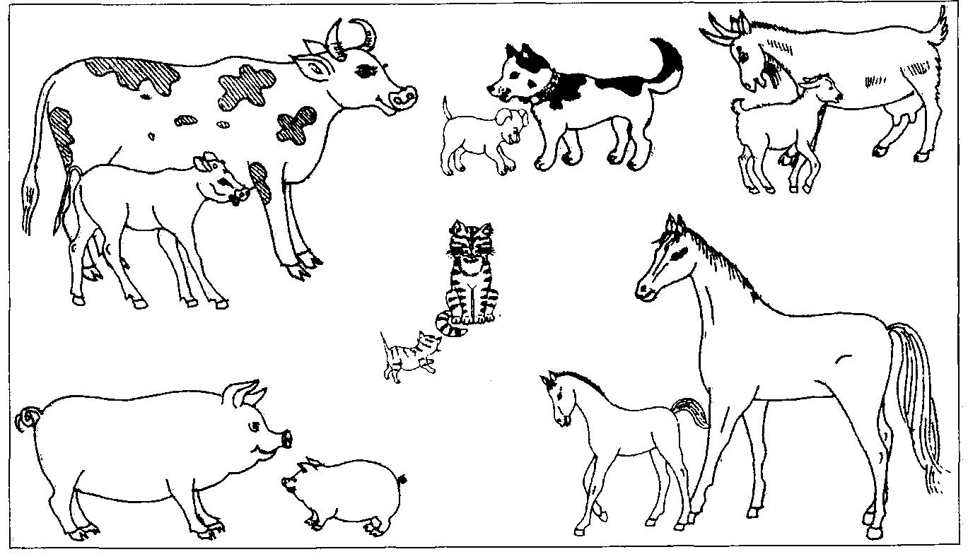 при рисунок детенышей животных видом