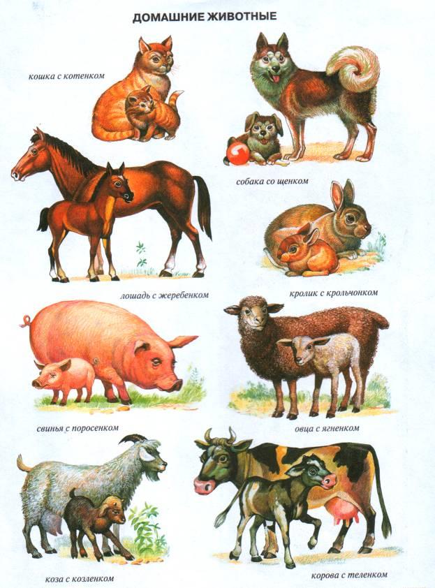 Картинки с домашними животными и их детенышами, поздравления дню