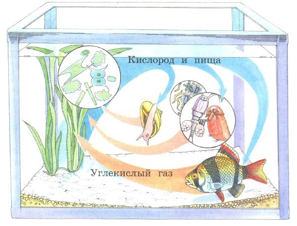практическая работа 2 аквариум как девушка модель экосистемы биология 11
